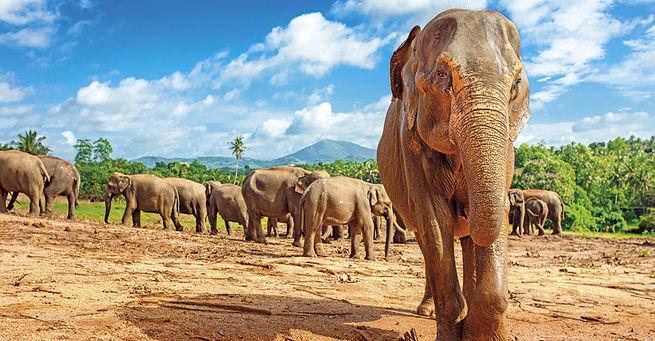 Sri Lanka - Za Poznanim A Odpocinkem I.