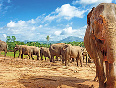 Sri Lanka - Za Poznanim a odpocinkem